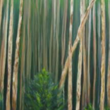 North of 60 – Aspen Forest in June #2 15x30 Oil on canvas