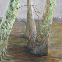 2016_01_montezumas_castle_paper_barked_trees_acrylic
